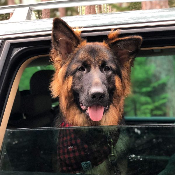 Top Tips for Traveling with a Dog