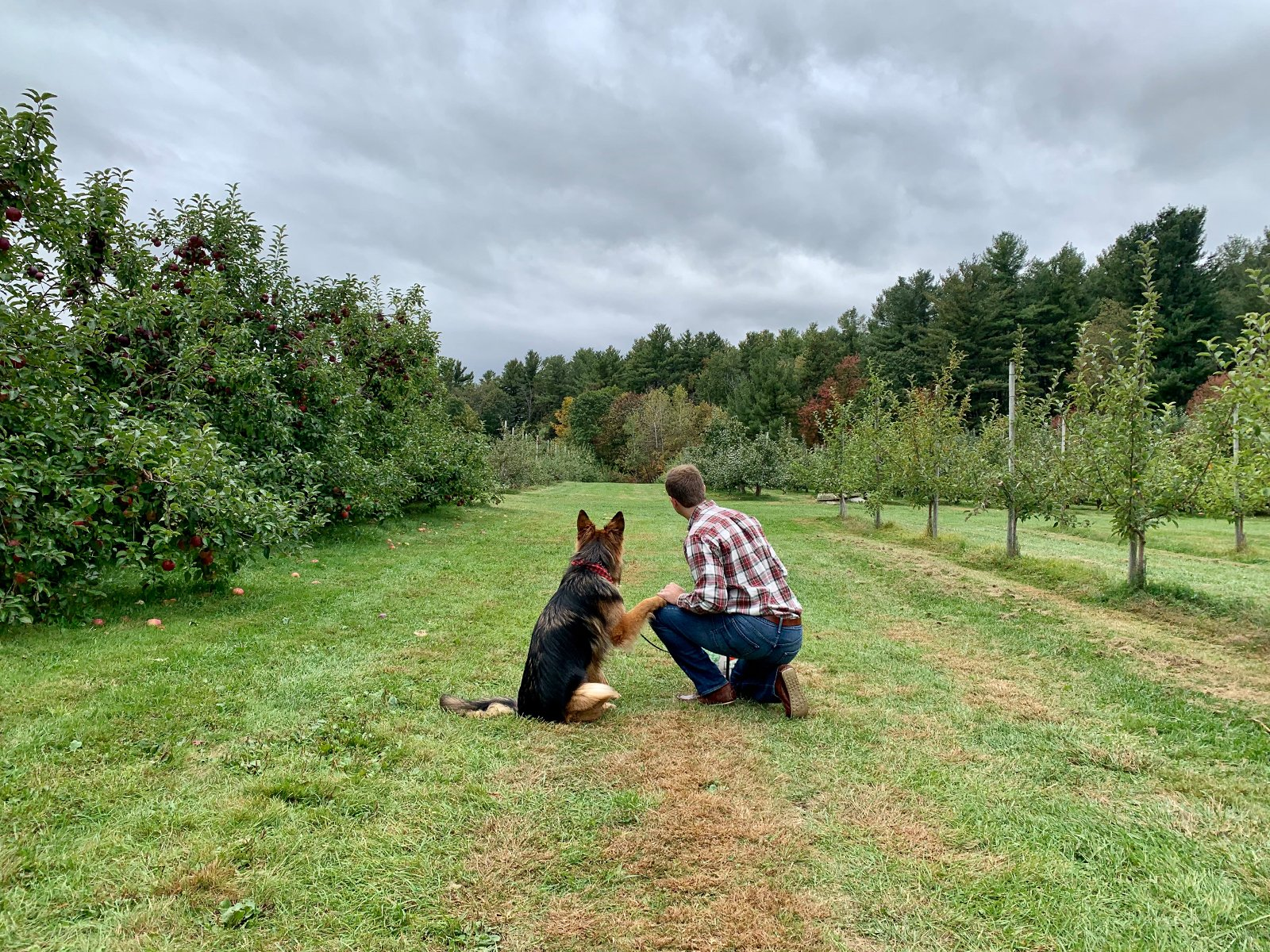 a man picking apples with his dog at Doe Orchards in Harvard, MA