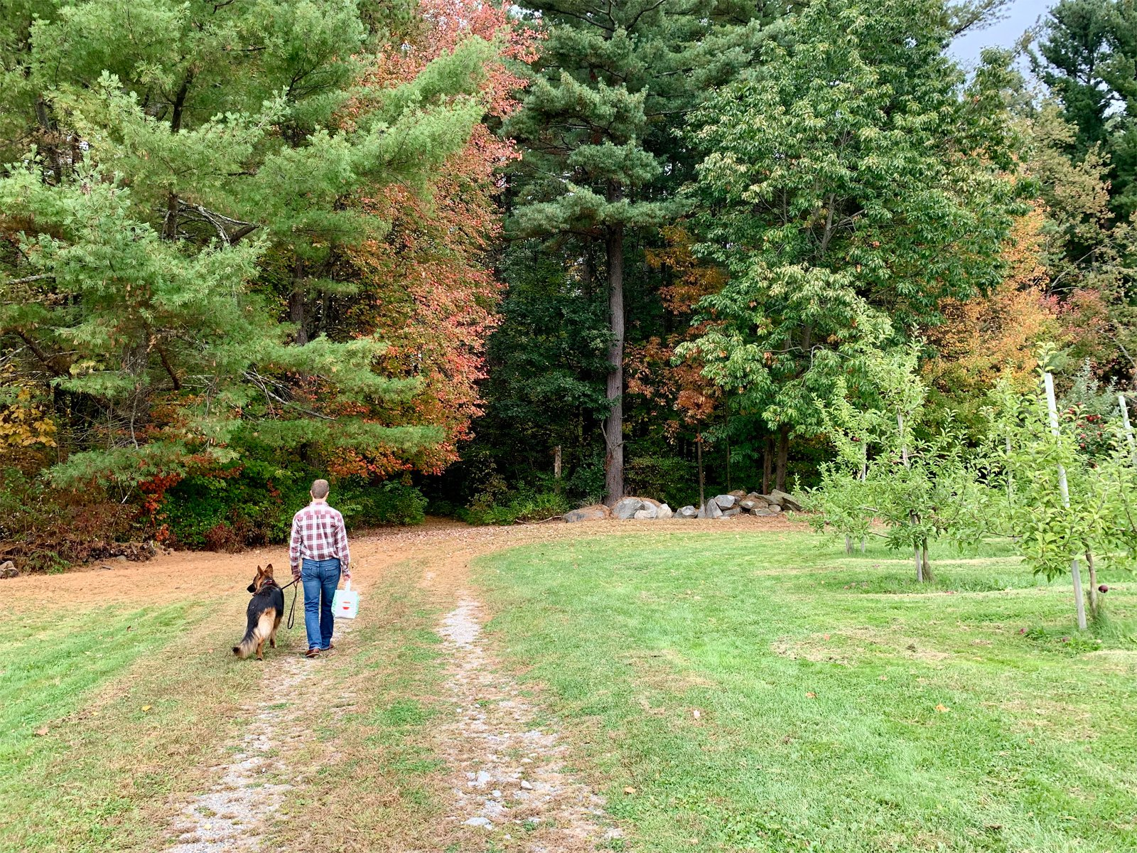 a man exploring a dog-friendly apple orchard with a dog in New England