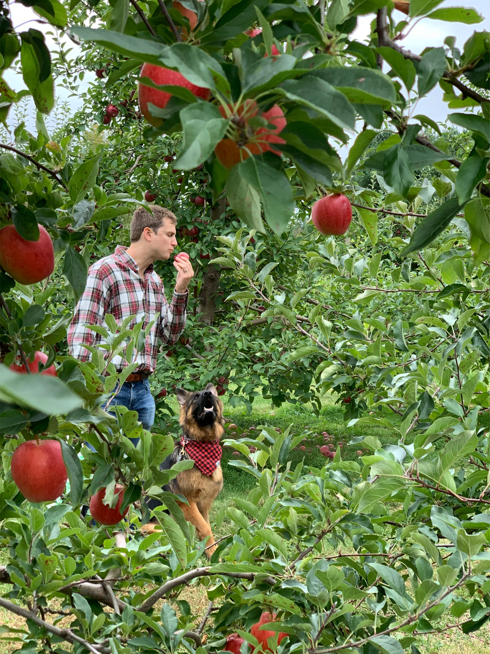 a man eating an apple with his dog at Doe Orchards in New England