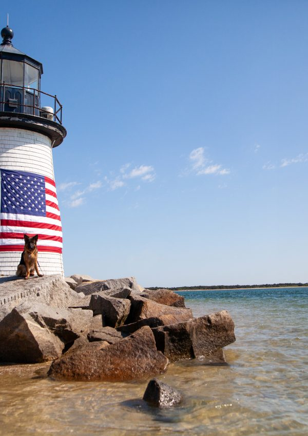Dog Friendly Guide to Nantucket, MA