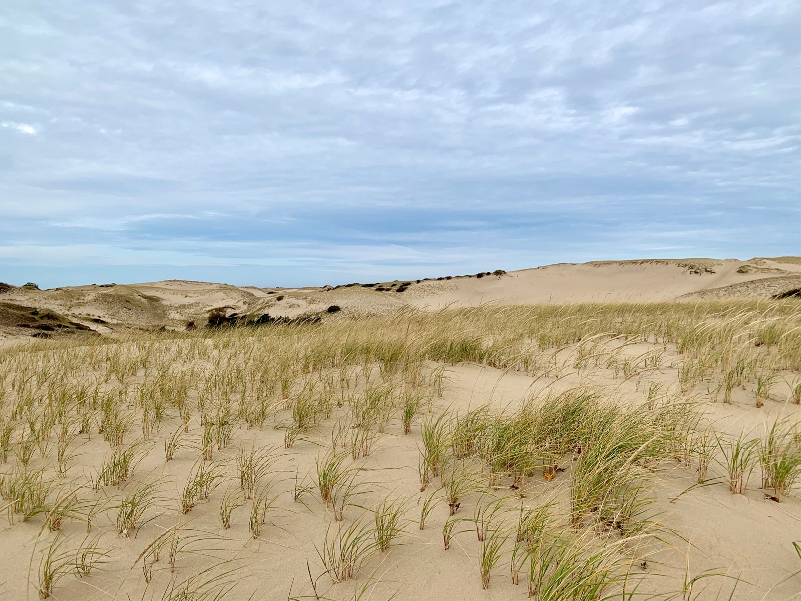 sand dunes in cape cod, massachusetts