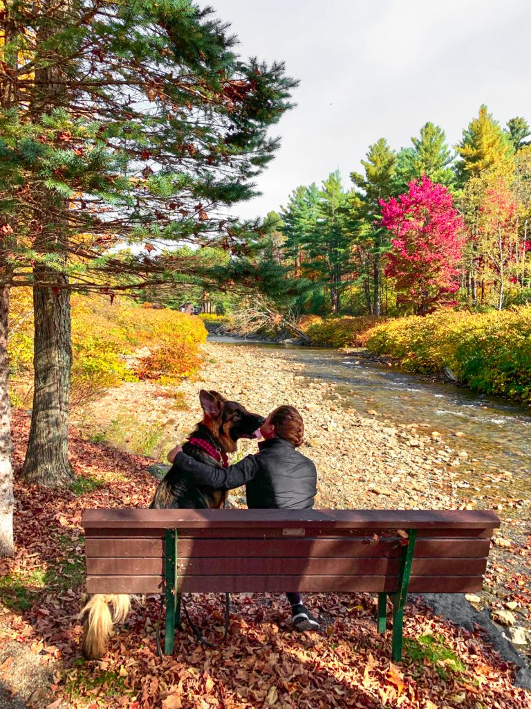 a woman and a German Shepherd dog sitting on a park bench overlooking the river and fall foliage on the dog friendly Stowe Recreation Trail in Stowe, VT