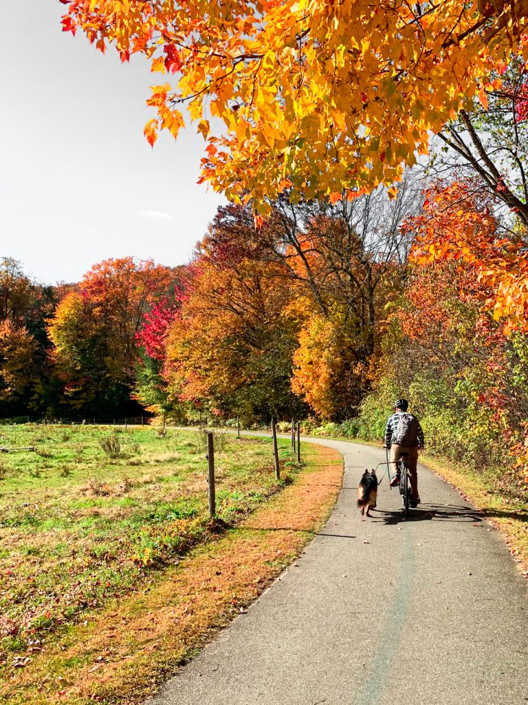 a woman and a German Shepherd dog sitting on a park bench ovA man biking with a German shepherd dog in the fall on the dog friendly Stowe Recreation Trail in Stowe, VT