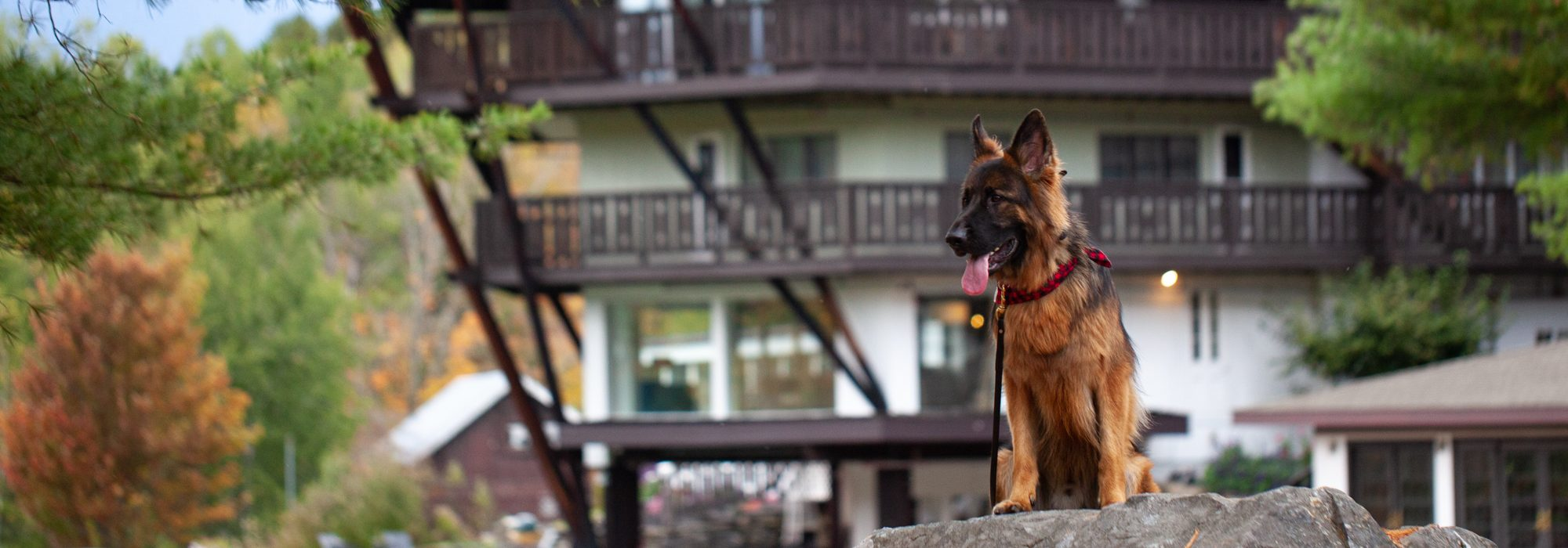 Dog Friendly Guide to Stowe, VT