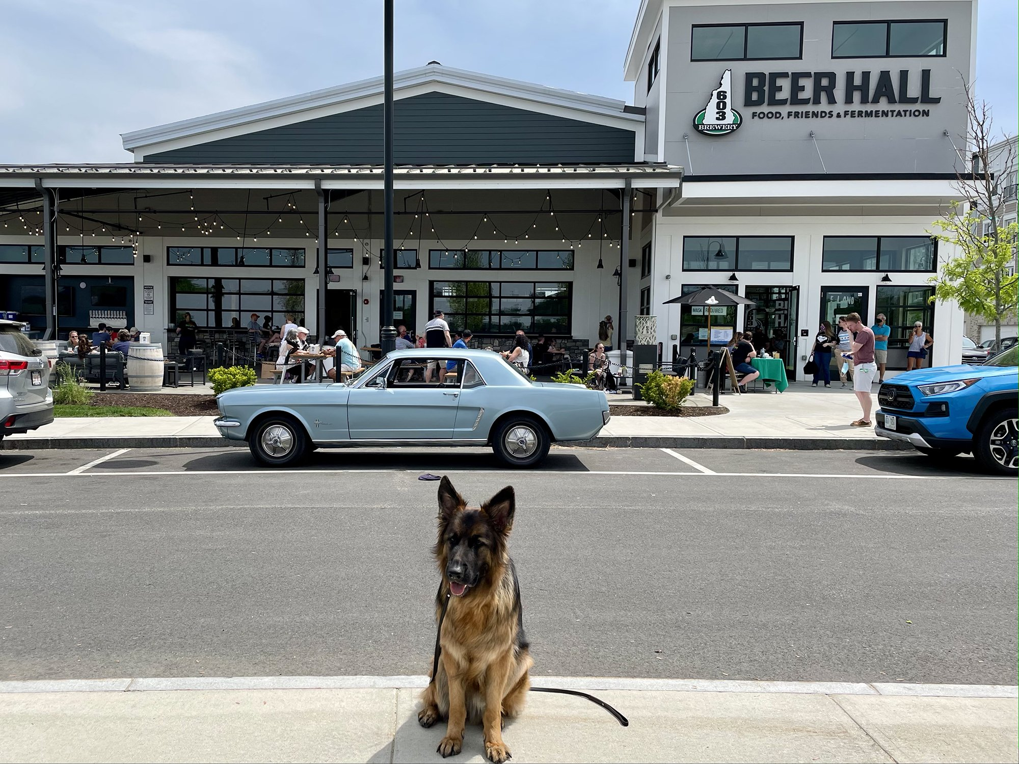 a German Shepherd dog sitting outside of a crowded patio with a sign that reads 603 Brewery and Beer Hall in Londonderry, New Hampshire