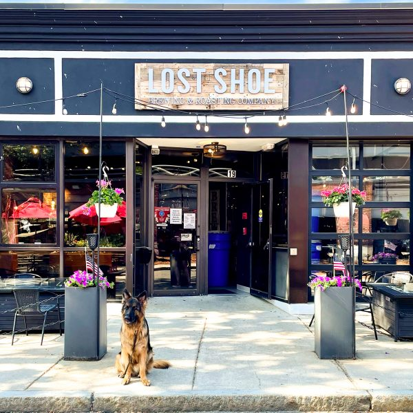 Best Dog Friendly Breweries in New England
