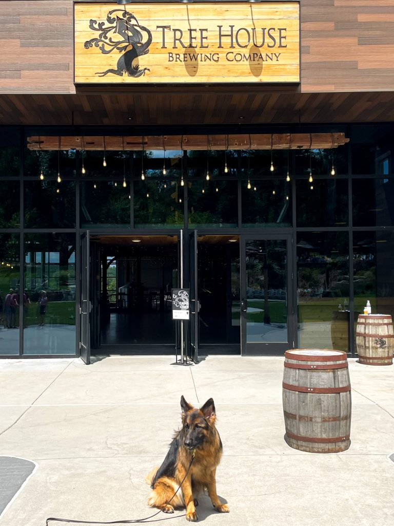 a dog sitting outside of Tree House Brewing Company in Charlton, MA